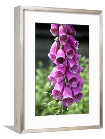 Foxglove Flowers (Digitalis Purpurea)-Victor De Schwanberg-Framed Art Print
