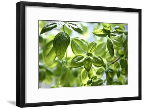 Basil Leaves-Victor De Schwanberg-Framed Art Print
