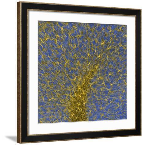 Glial Cells, Confocal Light Micrograph-Thomas Deerinck-Framed Art Print