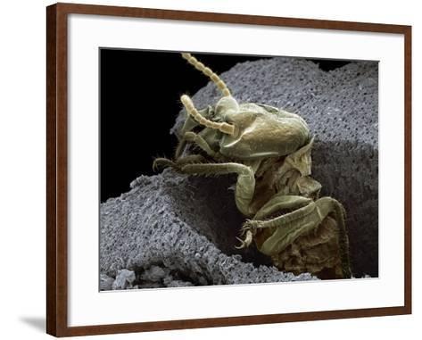 Termite Emerging From Wood, SEM-Steve Gschmeissner-Framed Art Print