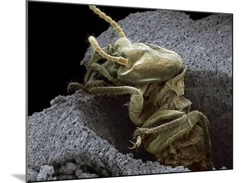 Termite Emerging From Wood, SEM-Steve Gschmeissner-Mounted Photographic Print