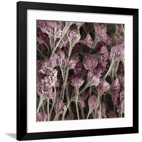 Penicillium Fungus, SEM-Steve Gschmeissner-Framed Art Print