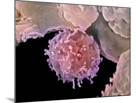 Embryonic Stem Cells, SEM-Steve Gschmeissner-Mounted Photographic Print