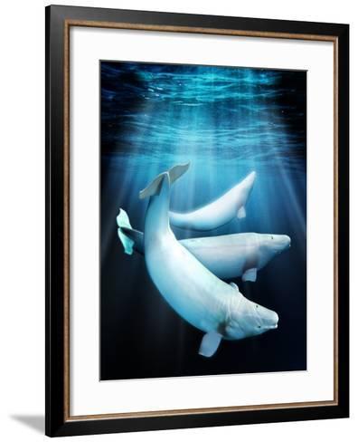 Beluga Whales, Artwork-Victor Habbick-Framed Art Print