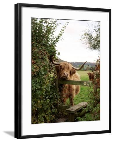 Highland Cow-Tek Image-Framed Art Print