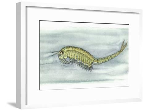 Fairy Shrimp, Artwork-Lizzie Harper-Framed Art Print