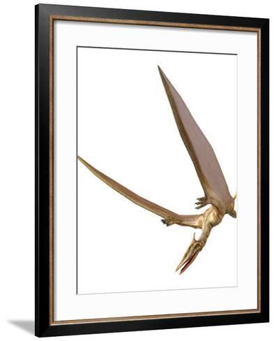 Pterosaur Flying, Computer Artwork-Roger Harris-Framed Art Print