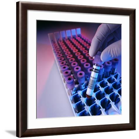 Blood Sampling Tubes-Tek Image-Framed Art Print