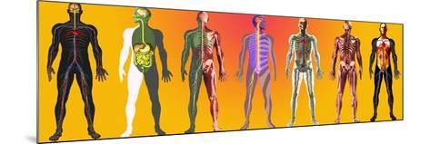 Human Anatomy ,artwork-Mehau Kulyk-Mounted Photographic Print