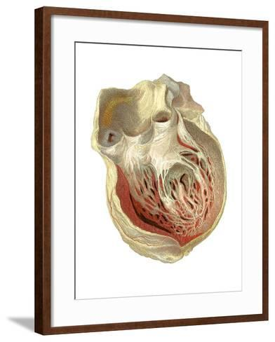 Heart Anatomy, Artwork-Mehau Kulyk-Framed Art Print