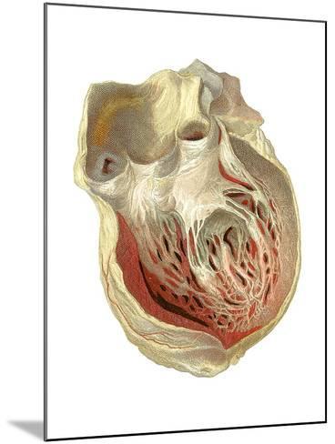 Heart Anatomy, Artwork-Mehau Kulyk-Mounted Photographic Print