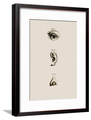 Surface Anatomy Of The Eye Ear And Nose Photographic Print By Mehau