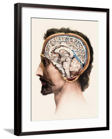 Brain Anatomy-Mehau Kulyk-Framed Art Print