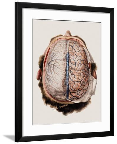 Brain Meninges-Mehau Kulyk-Framed Art Print