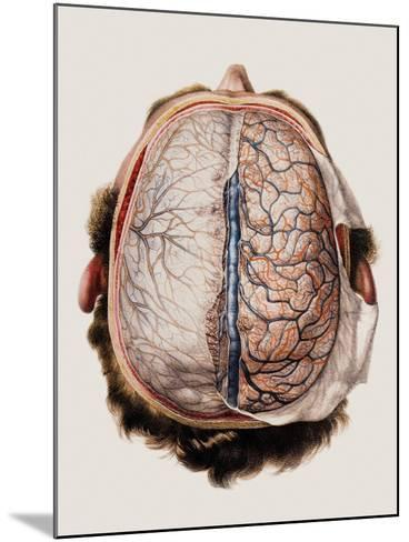 Brain Meninges-Mehau Kulyk-Mounted Photographic Print