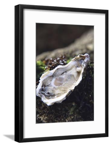 Oyster-Veronique Leplat-Framed Art Print
