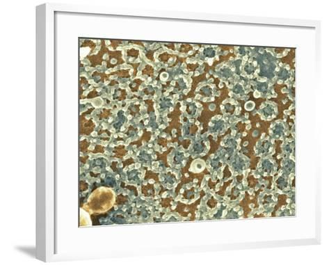 Nuclear Pore Complexes, SEM-Science Photo Library-Framed Art Print