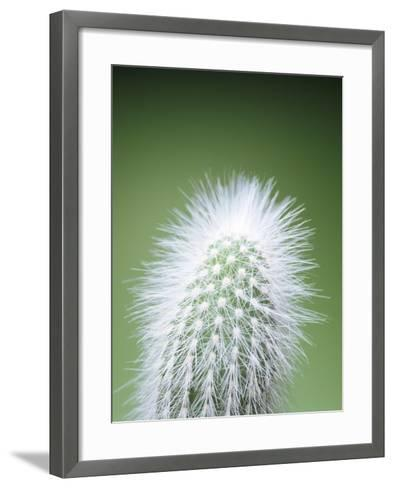 Cactus Plant Spines-Lawrence Lawry-Framed Art Print