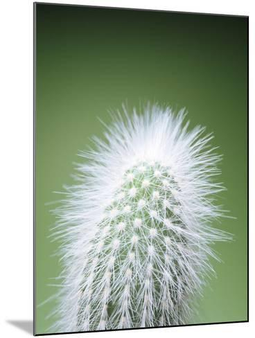 Cactus Plant Spines-Lawrence Lawry-Mounted Photographic Print