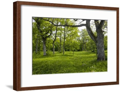 Ancient Wood Pasture, Estonia-Bob Gibbons-Framed Art Print