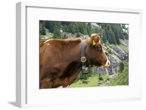 Cattle, Switzerland-Bob Gibbons-Framed Art Print