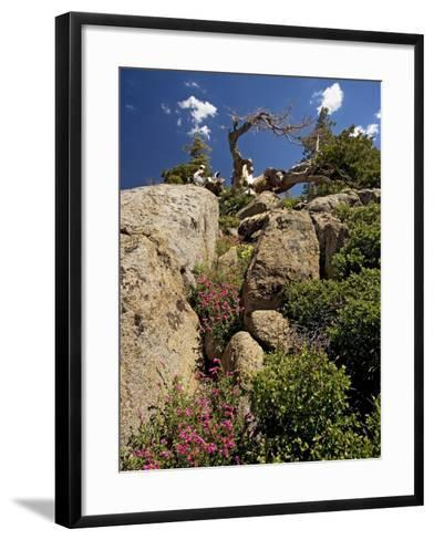 Granite Outcrop-Bob Gibbons-Framed Art Print