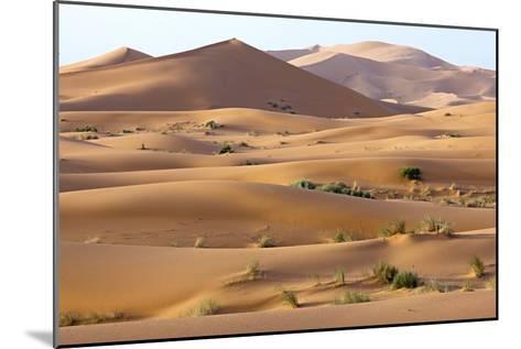 Saharan Sand Dunes-Bob Gibbons-Mounted Photographic Print