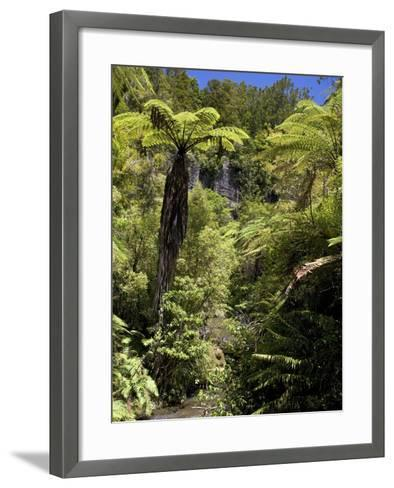 Mixed Ancient Forest-Bob Gibbons-Framed Art Print