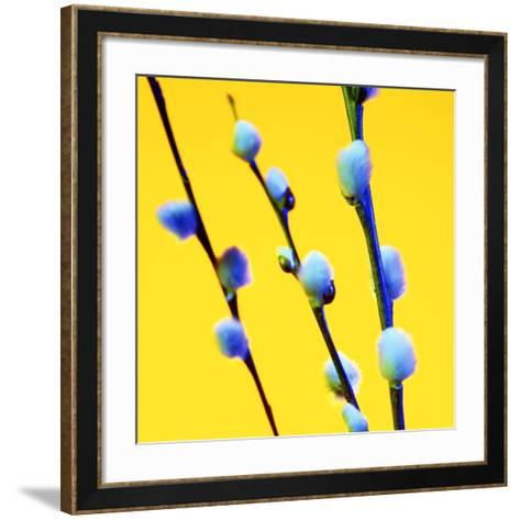 Pussy Willow Catkins (Salix Sp.)-Johnny Greig-Framed Art Print