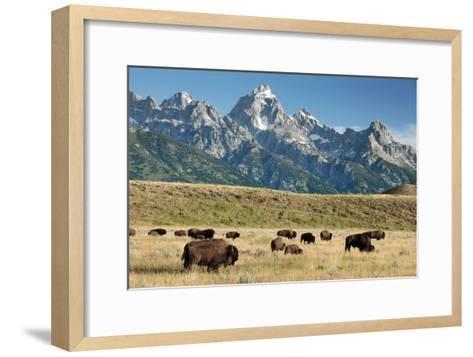 Herd of American Bison-Bob Gibbons-Framed Art Print