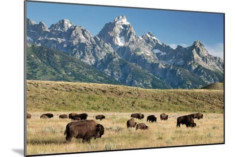 Herd of American Bison-Bob Gibbons-Mounted Photographic Print