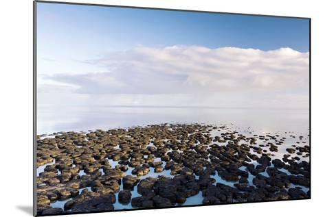 Stromatolites In Australia-Bob Gibbons-Mounted Photographic Print