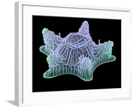 Diatom Alga, SEM-Steve Gschmeissner-Framed Art Print