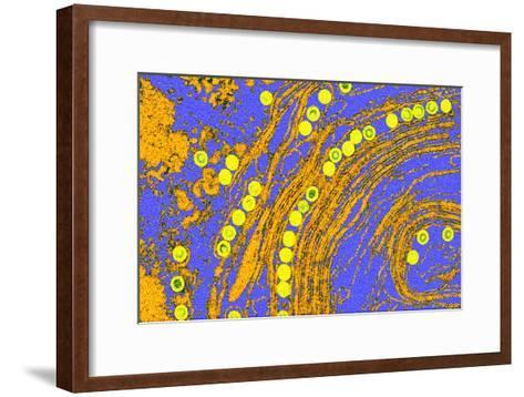 Coloured TEM of Herpes Simplex Viruses Inside Cell-Dr. Linda Stannard-Framed Art Print