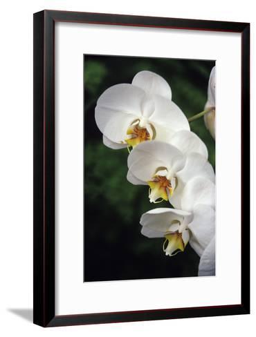 Orchid Flowers-Duncan Smith-Framed Art Print