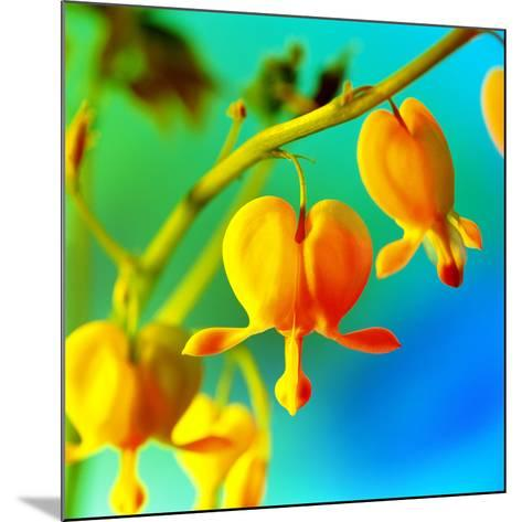 Bleeding Heart (Dicentra Sp.)-Johnny Greig-Mounted Photographic Print