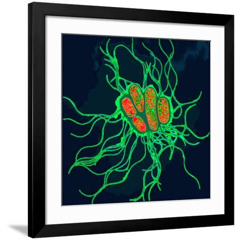 Coloured TEM of Salmonella Bacteria-Dr. Linda Stannard-Framed Art Print