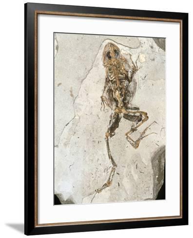 Fossilised Frog Embedded In Rock-Volker Steger-Framed Art Print