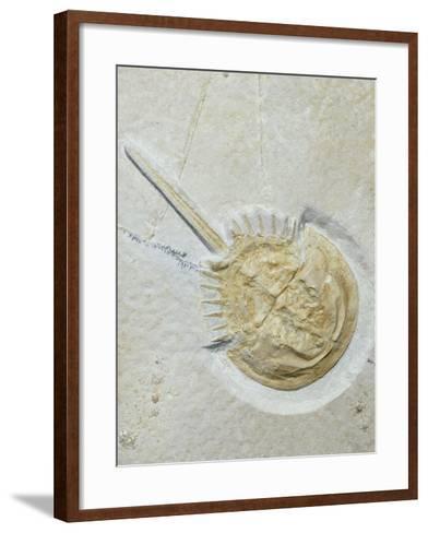 Fossilised Horseshoe Crab-Volker Steger-Framed Art Print