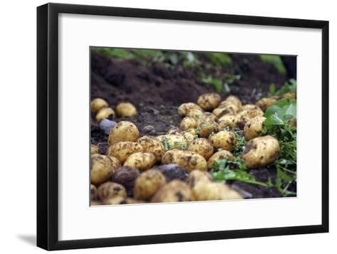 Potato Harvest-Bjorn Svensson-Framed Art Print