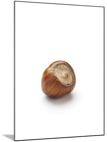Hazelnut-Jon Stokes-Mounted Photographic Print