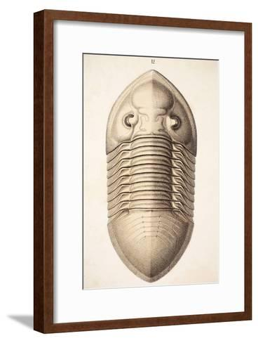 1846 Victorian Trilobite Platycephalus-Paul Stewart-Framed Art Print