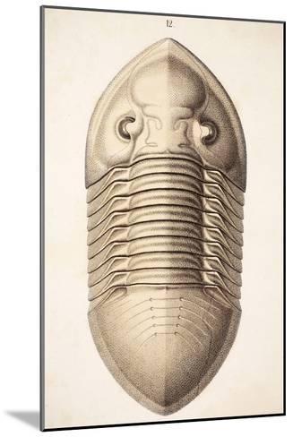 1846 Victorian Trilobite Platycephalus-Paul Stewart-Mounted Photographic Print