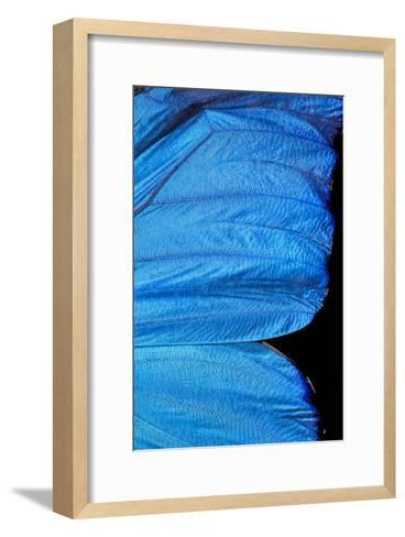 Blue Morpho Butterfly Wing-Paul Stewart-Framed Art Print