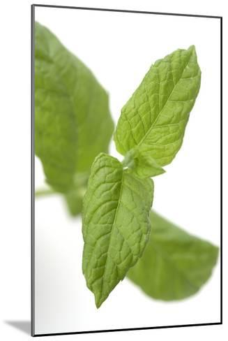 Mint Leaves-Jon Stokes-Mounted Photographic Print