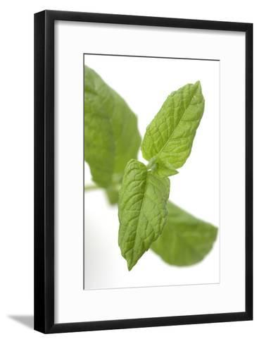 Mint Leaves-Jon Stokes-Framed Art Print