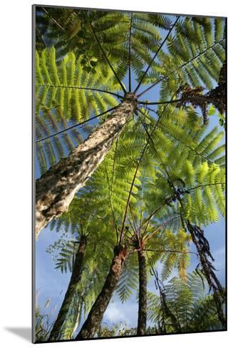 Tree Fern-Bjorn Svensson-Mounted Photographic Print