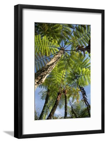 Tree Fern-Bjorn Svensson-Framed Art Print