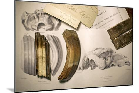 1838 Toxodon Teeth & Figs. From Darwin C-Paul Stewart-Mounted Photographic Print