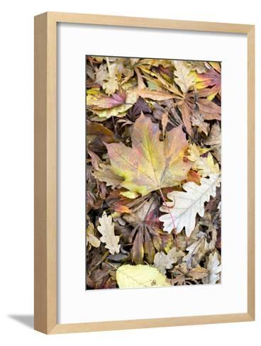 Autumn Leaves-Jon Stokes-Framed Art Print